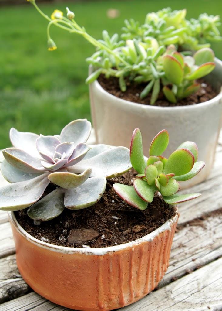 How to keep succulents alive decor fix mightylinksfo