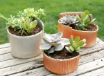 succulents-2-all-3