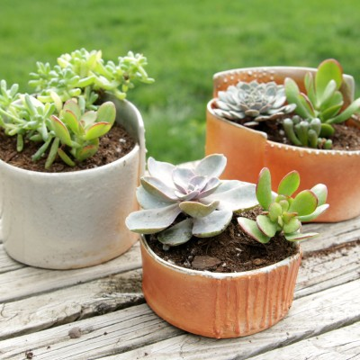 How to Keep Succulents Alive